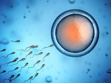 bestil sæd til hjemmet insemination